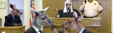 Kangaroo Courts on Campus?